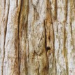 Old and weathered wood — Stock Photo