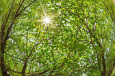 Branches of the tree against sunlight — Stock Photo