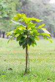 Small tree plantation — Stock Photo