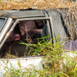 Car wreck in overgrown grasses — Stock Photo