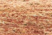 Bodenvorbereitung für die bepflanzung — Stockfoto
