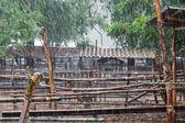 Piove in fattoria — Foto Stock