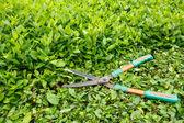Ořezávání keřů nůžky — Stock fotografie