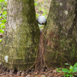pallina da golf bloccato tra due palme — Foto Stock