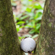 Golf ball stuck between two palm trees — Стоковая фотография