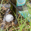 Golf ball near the tab water pipe — Stock Photo