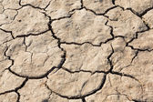 Cracked soil texture — Stock Photo