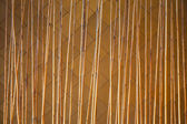Bamboo fence — Stockfoto