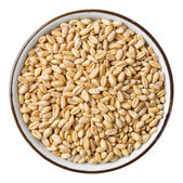 Wheat grain — Стоковое фото
