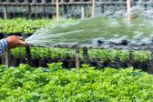 Watering — Foto Stock