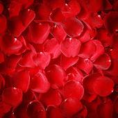 Vignette style red rose petal texture — Photo