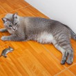 Stock Photo: Cat kill rat