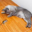 Cat kill rat — Stock Photo #42054617