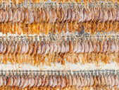 Dried squid — Stock Photo