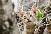 Thai cute naughty cat — Stock Photo