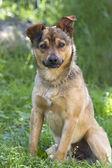 Perro joven retrato — Foto de Stock