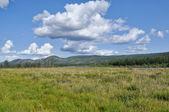 Swampy plain under the blue sky. — Stock Photo