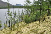 Moss shore of the lake on a cloudy day in Yakutia. — Foto de Stock