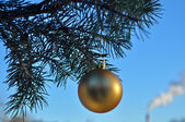 The Golden ball on a branch of the Christmas tree. — Stock Photo