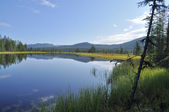 Blue water of the lake under the blue sky framed stems sedges. — Stock Photo