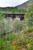 Wooden bridge in Yakutia across the mountain river. — Stock Photo