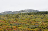 Autumn tundra on the background of mountains in Yakutia. — Stock Photo