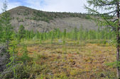 Sparse mountain taiga in Yakutia.  — Stock Photo