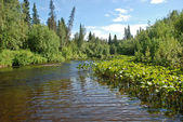 River in the forests of the Komi Republic. — Stock Photo