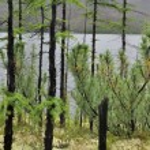 Panorama of lakes in Yakutia. — Stock Photo