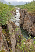 Mountain river in the rocks. — Stock Photo