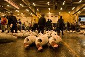 Poissons de tsukiji à tokyo au japon — Photo