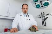 Черепаха на ветеринара — Стоковое фото