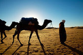Camel walking through the desert — Foto Stock