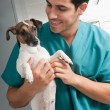 Veterinary taking care of pet - Stock Photo
