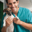 Royalty-Free Stock Photo: Veterinary taking care of pet