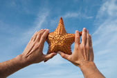 Sea star — Foto Stock