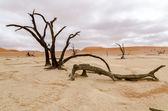 Dead trees in Deadvlei, Namibia — Stock Photo