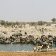 Waterhole in Etosha National Park, Namibia - Stock Photo
