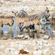 Wildlife at a waterhole in Etosha National Park, Namibia — Stock Photo