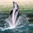 Common bottlenose dolphin playing — Stock Photo #22181921