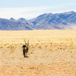 Stock Photo: Oryx in desert landscape