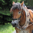 Horse with harness — Stock Photo #34425473