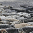 Seals on beach — Stock Photo #34793623