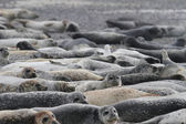 Seals on the beach — Stock Photo