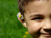 Flower on the ear — Stock Photo