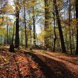 Austrian Forest — Stock Photo