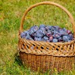 Basket of plums — Stock Photo #31486829