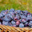 Stock Photo: Basket of plums