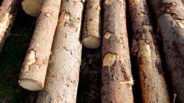 Firewood — Stock Video
