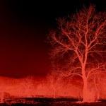Magic abstract tree — Stock Photo